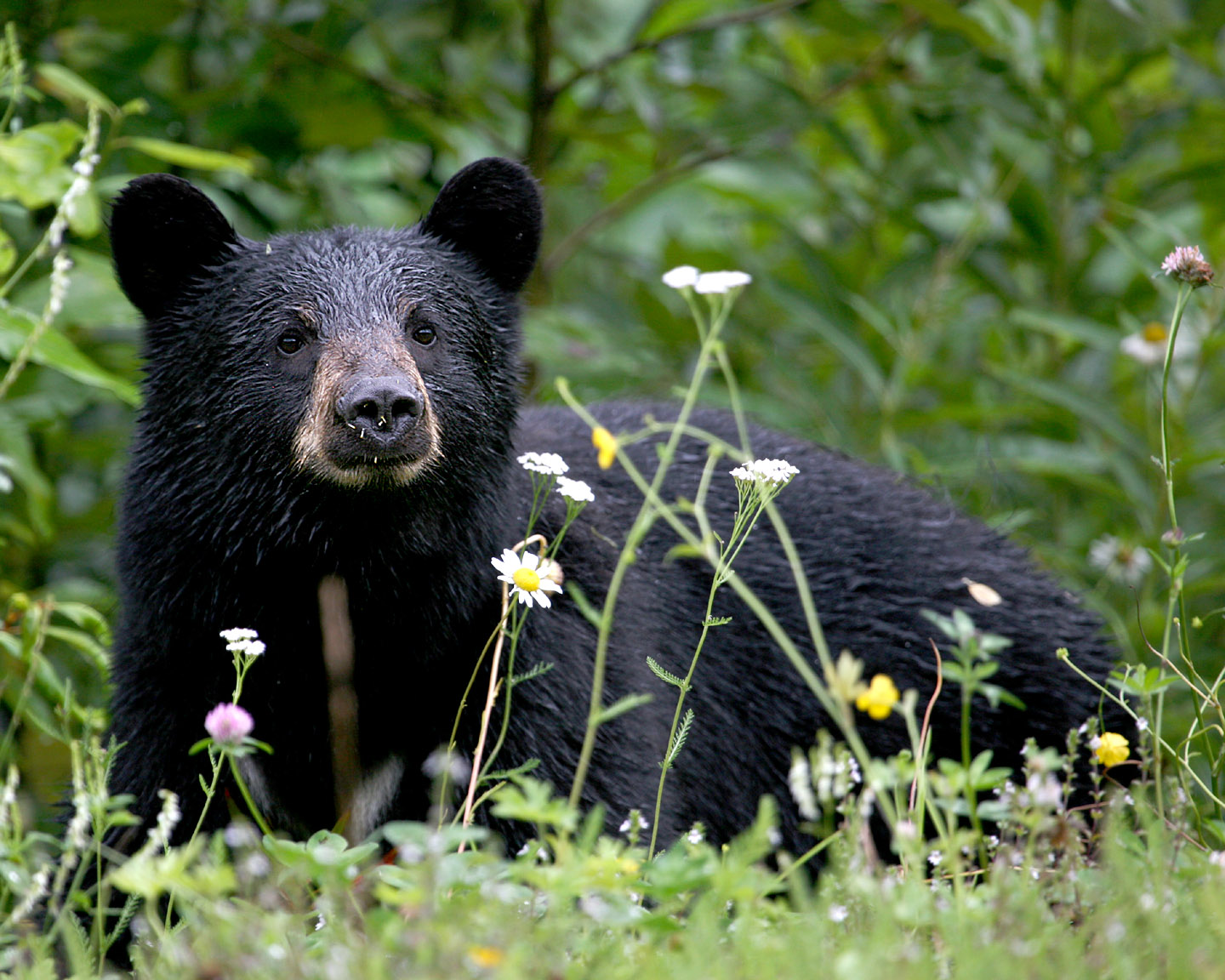 blackbearfeatureimage2